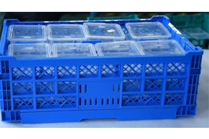 SHG Collapsible Crates F with Holder For Plastic Packaging Containers Transportation